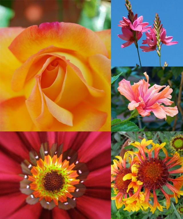 Montage of flower images by Gillianloves
