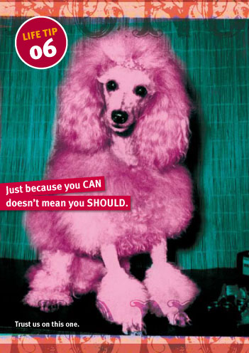 CArd with image of pink poodle—Just because you CAN, doesn't mean you SHOULD