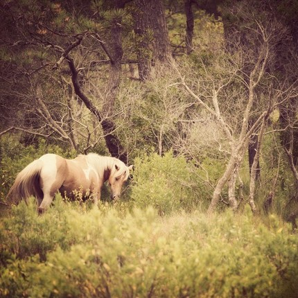 Palamino horse in yellowish meadow grasses against winter trees