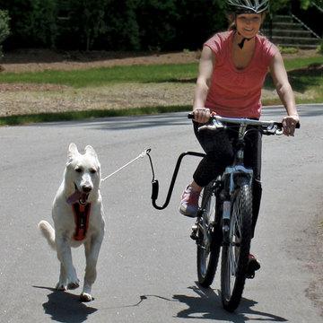 Dog running with bike