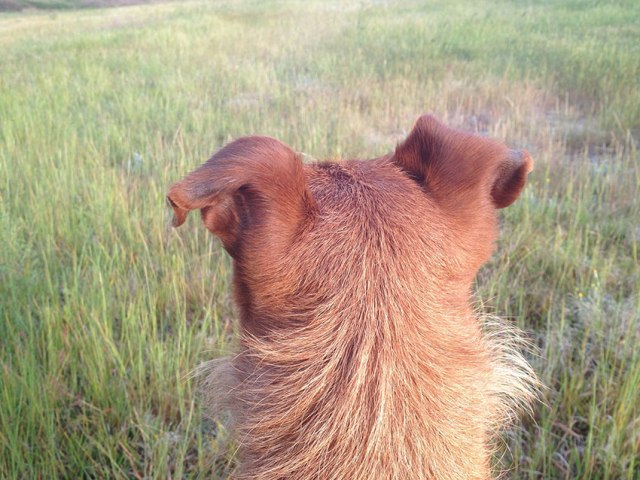 Dog looking away, frogs... I hear frogs