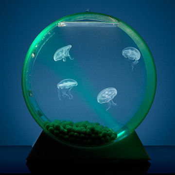 Jellyfish in small tank for desktop