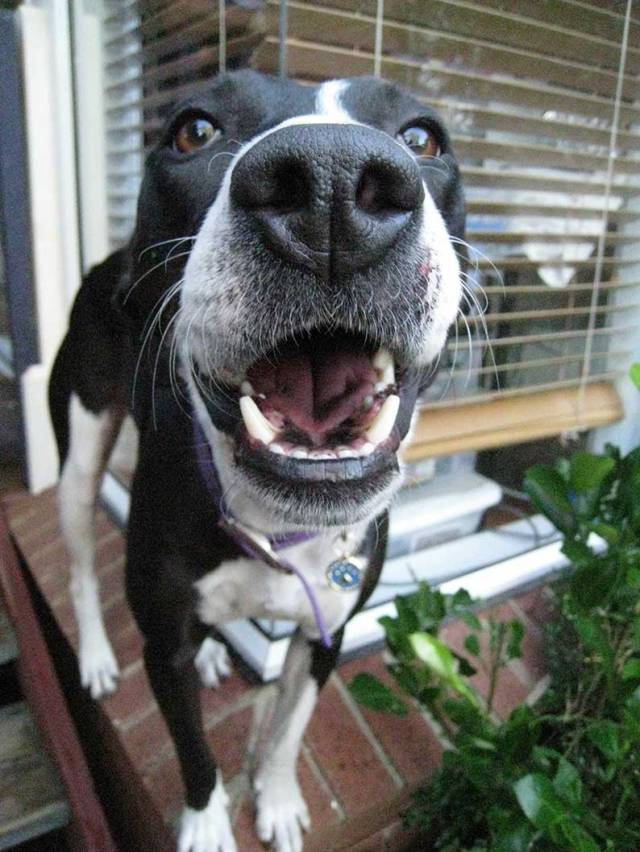 Big nose dog with a smiley face