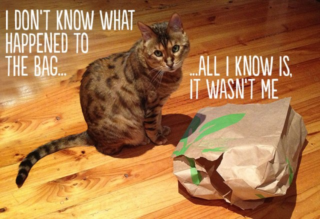 CAt sitting innocently next to wrecked paper shopping bag