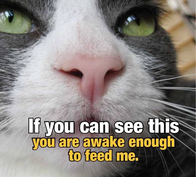 "CLose up of cat's face with text ""If you can see this you are awake enough to feed me""."