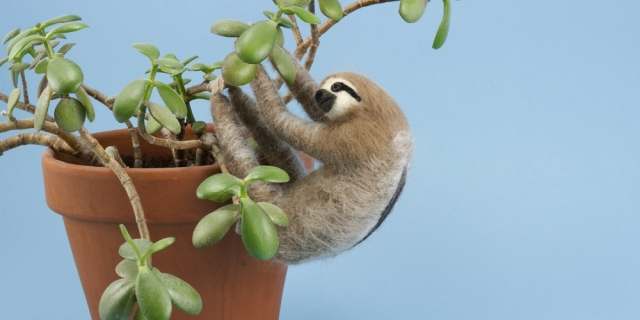 Felt sloth on a pot plant