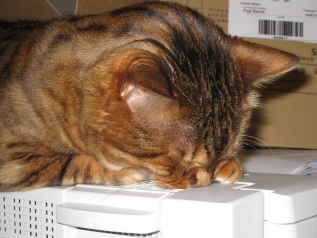 Cat with face buried in printer, asleep.