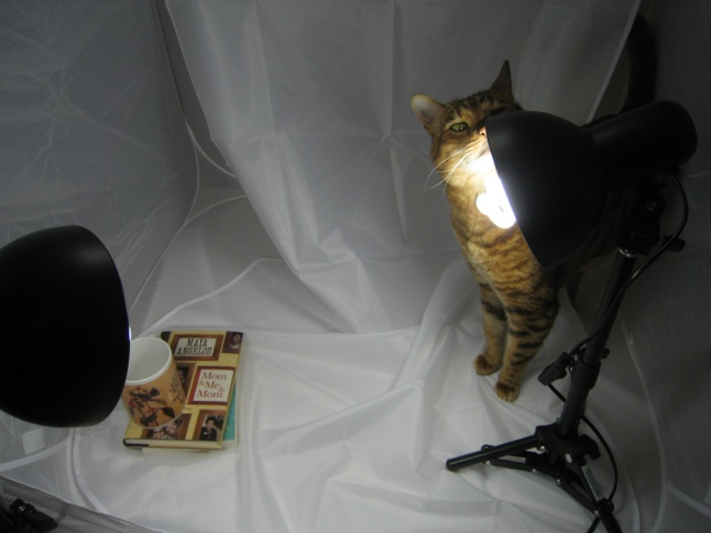 Cat sniffing light, cat blinding itself by eyeballing lightbulb